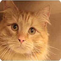 Adopt A Pet :: Chandler & Cormick - Arlington, VA