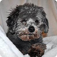 Adopt A Pet :: CHARLIE - Elk River, MN