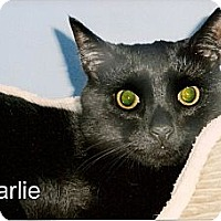 Adopt A Pet :: Charlie - Medway, MA