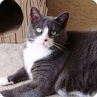 Adopt A Pet :: Monty - Cerritos, CA