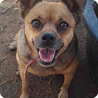 Adopt A Pet :: Lucy - Winchester, CA