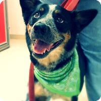 Adopt A Pet :: Sammy - Green Bay, WI