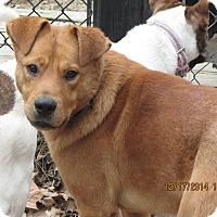 Adopt A Pet :: Alex - Memphis, TN