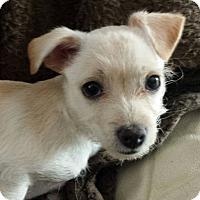 Adopt A Pet :: RUDY WAROK - Higley, AZ