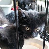 Adopt A Pet :: Jesse - Putnam, CT