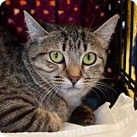 Adopt A Pet :: Elly - Atlanta, GA