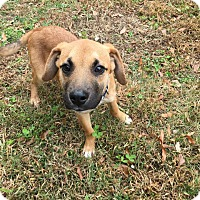 Adopt A Pet :: Hawk - Millersville, MD
