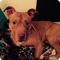 Adopt A Pet :: maison - Wanaque, NJ