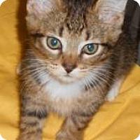 Adopt A Pet :: Dasher - Miami, FL