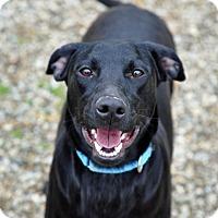 Adopt A Pet :: Carryl - Pleasant Plain, OH