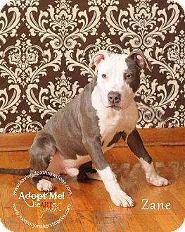 Pit Bull Terrier Mix Dog for adoption in Topeka, Kansas - Zane