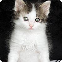 Adopt A Pet :: Meyer - St Louis, MO