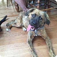 Adopt A Pet :: Bingo - Hohenwald, TN