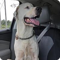 "Adopt A Pet :: John Wayne (""Duke"") - Jacksonville, FL"