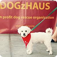 Adopt A Pet :: JACKS - Glendale, CA