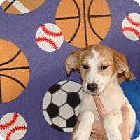Adopt A Pet :: Kara - Oviedo, FL