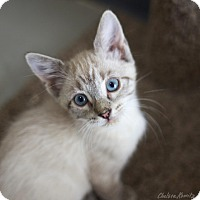 Adopt A Pet :: Thora - Canyon Country, CA