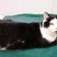 Adopt A Pet :: Megan - Stuart, VA