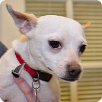Adopt A Pet :: Bolt - Tulsa, OK