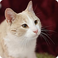 Adopt A Pet :: Shaw - STRAY - Midland, MI