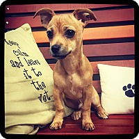 Adopt A Pet :: Toby - Grand Bay, AL