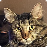 Adopt A Pet :: Tabitha - Antioch, CA