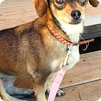 Adopt A Pet :: Mazie - San Diego, CA