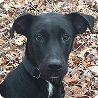 Adopt A Pet :: Journey - Washington, DC