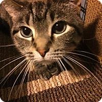 Adopt A Pet :: Sascha - Baltimore, MD