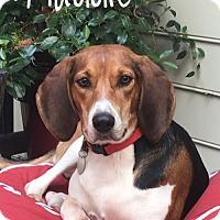 Adopt A Pet :: Maddie - Milton, GA
