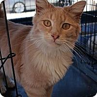 Adopt A Pet :: mufasa - Santa Monica, CA