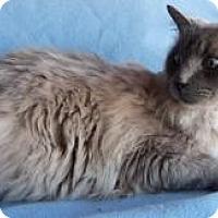 Adopt A Pet :: Sampson - Ennis, TX