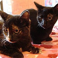 Adopt A Pet :: Beauty and Elisa - Albany, NY