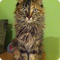 Adopt A Pet :: Bebe - Irvine, CA