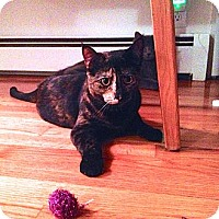 Adopt A Pet :: Sophie (Courtesy Post) - North Branford, CT