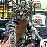 Adopt A Pet :: Prudence - Santa Monica, CA