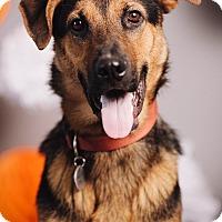 Adopt A Pet :: Pluto - Portland, OR