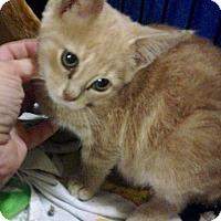 Adopt A Pet :: Tristan - East Brunswick, NJ