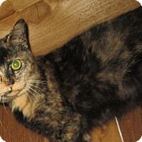Adopt A Pet :: Queenie (tortoiseshell) - Witter, AR