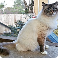Adopt A Pet :: Finn - Davis, CA