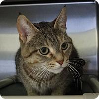 Adopt A Pet :: Gato - Elyria, OH