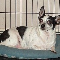 Adopt A Pet :: Chico - Poplarville,, MS
