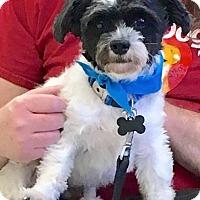 Adopt A Pet :: Bam Bam - Scottsdale, AZ