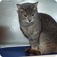 Adopt A Pet :: Stella - Shelby, MI