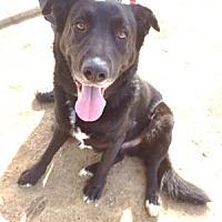 Adopt A Pet :: Red - San Francisco, CA