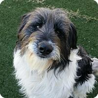 Adopt A Pet :: Odie - Woonsocket, RI