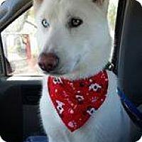 Adopt A Pet :: Casper - Bonsall, CA