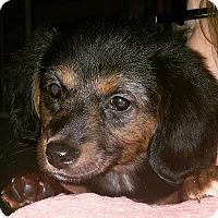 Adopt A Pet :: Mac - Marietta, GA