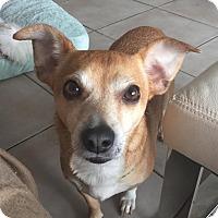 Adopt A Pet :: Indy - Miami, FL