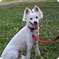 Adopt A Pet :: Snow - Elyria, OH